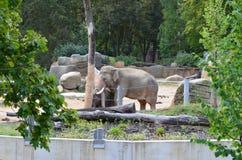 Elefant Immagini Stock Libere da Diritti