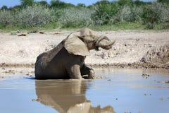 Elefant Arkivbild