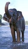 Elefant 7 Lizenzfreie Stockbilder