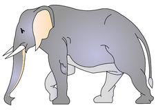elefant Stock Illustrationer
