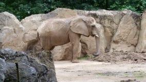 Elefant Fotografia Stock