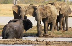 Elefant Stockbild