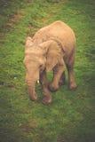 Elefant in Addo Elephant National Park, Südafrika Lizenzfreies Stockbild