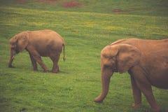 Elefant in Addo Elephant National Park, Südafrika Lizenzfreies Stockfoto