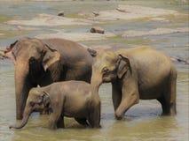 Elefant als Familie lizenzfreie stockbilder