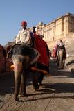 Elefant Amber Fort Royaltyfri Foto
