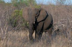 Elefant Stock Photos