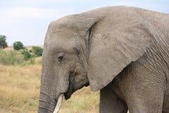 Elefant auf das Masai Stockbilder