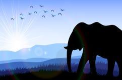 Elefant auf dem Gebiet an der Dämmerung Stockfotografie