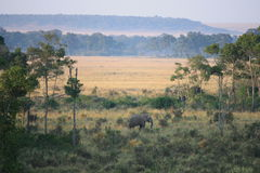Elefant auf dem Masai Stockfotografie