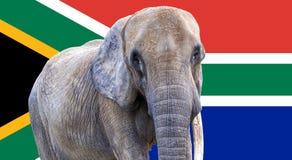 Elefant auf Südafrika-Flagge benutzt als Hintergrund Stockbild