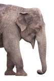 Elefant auf Weiß Stockfotografie