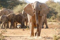 Elefant-Aufladung lizenzfreies stockfoto