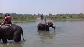 Elefant-Bad Lizenzfreies Stockfoto
