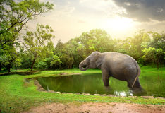 Elephant, bathing  in lake Stock Photo