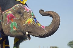 Elefant-Begrüßung Stockfoto