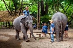 Elefant bei der Arbeit Lizenzfreie Stockfotografie