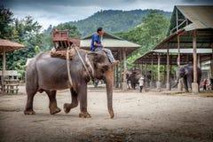 Elefant bei der Arbeit Stockbild