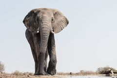 Elefant bei Waterhole lizenzfreies stockbild
