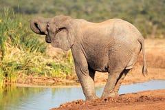 Elefant bei Waterhole Lizenzfreie Stockfotos
