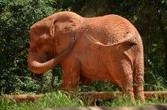 Elefant beiseite Stockbild