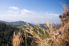 Elefant-Berg oder Galaxie-Berg Zapfen Pha Phum nationales PA Lizenzfreie Stockfotos