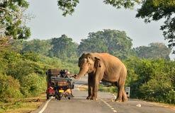 Elefant blockiert Verkehr Lizenzfreie Stockfotos