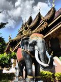 Elefant in Chiang Mai / Thailand Stock Photography