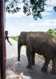 Elefant, der auf die Straße bei Sonnenuntergang geht Stockfotos