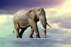 Elefant, der auf ein Seil geht stockfoto