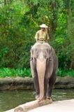 Elefant, der auf Protokoll balanciert Lizenzfreie Stockbilder