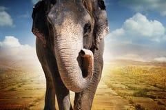 Elefant, der auf Straße geht Lizenzfreie Stockbilder