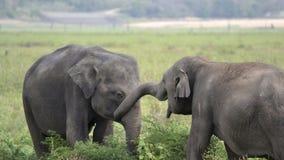 Elefant, der auf Wiese spielt Stockfoto