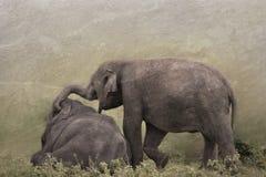 Elefant, der auf Wiese spielt Lizenzfreie Stockfotografie