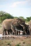 Elefant, der Bad nimmt Stockbild
