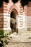 Elefant, der das Gebäude kommt lizenzfreie stockfotografie