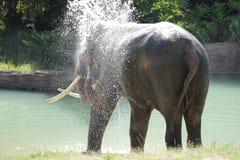 Elefant, der die Dusche im Fluss nimmt Lizenzfreie Stockbilder