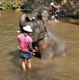 Elefant, der die Dusche im Fluss nimmt Lizenzfreies Stockfoto