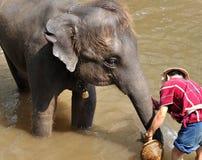 Elefant, der die Dusche im Fluss nimmt Stockbild