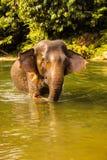 Elefant, der die Dusche im Fluss nimmt Lizenzfreie Stockfotografie