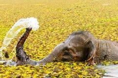 Elefant, der die Dusche im Fluss nimmt Stockbilder