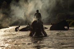 Elefant, der die Dusche im Fluss nimmt stockfoto