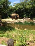 Elefant, der die einfachen Sachen genießt Stockfoto