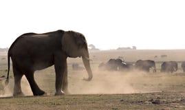 Elefant, der ein dustbath nimmt Stockfotos