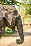 Elefant, der ein Lebensmittel in der natürlichen Reserve isst thailand Stockfotos