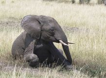 Elefant, der ein Schlamm-Bad nimmt Lizenzfreies Stockfoto