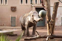 Elefant, der in einem Zoo spielt lizenzfreie stockfotografie