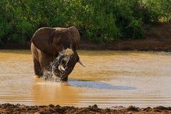 Elefant, der in einer Wasserstelle spritzt stockbild