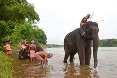 Elefant, der im Fluss badet Lizenzfreie Stockfotos