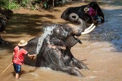 Elefant, der im Fluss badet Lizenzfreie Stockfotografie